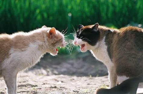 kedi (12) - ryuklemobi