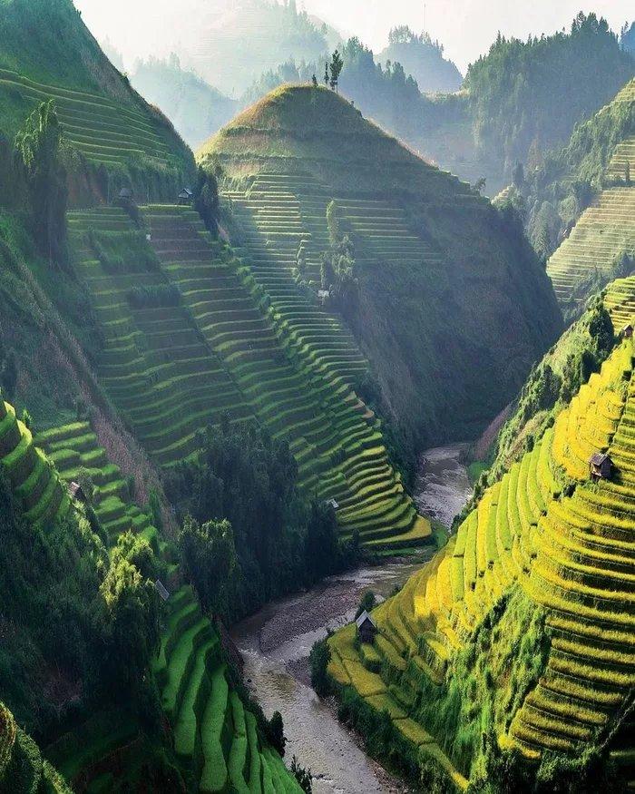 Rice-fields-of-Vietnam - ryuklemobi