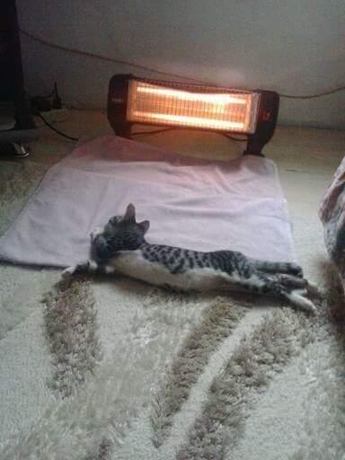 kedi (1) - ryuklemobi