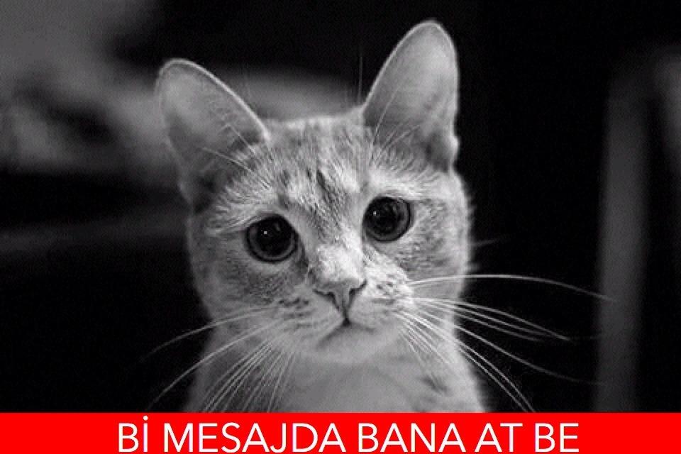 cat2 (3) - ryuklemobi