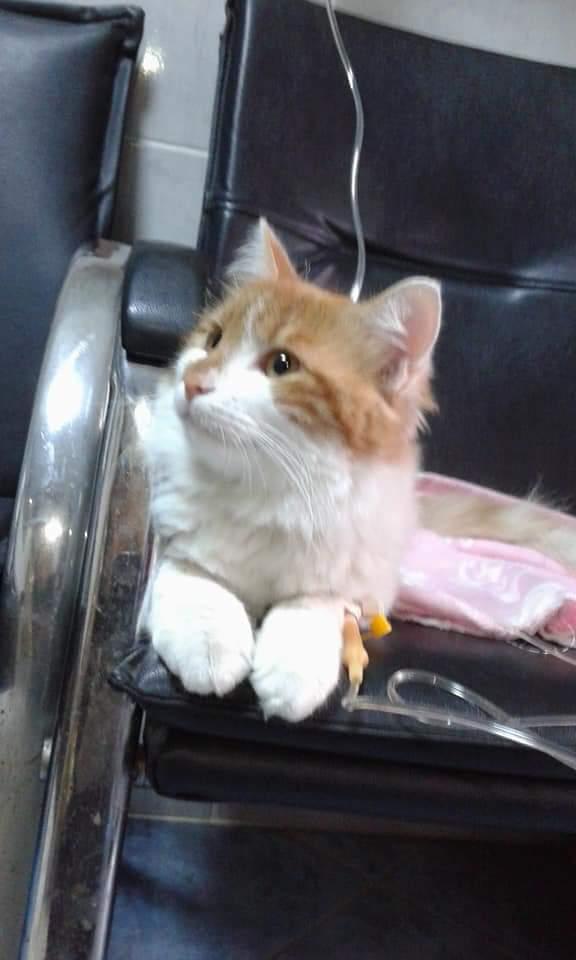 kedi (9) - ryuklemobi