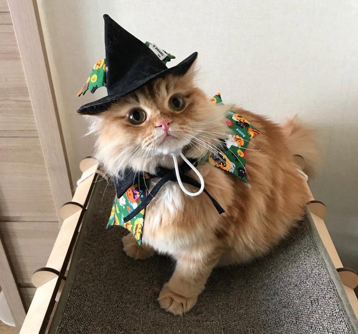 kedi (14)