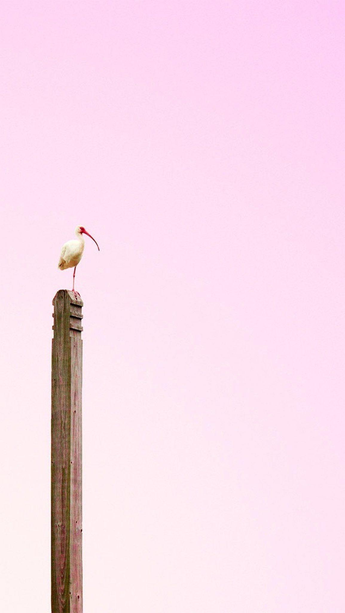 stork nest