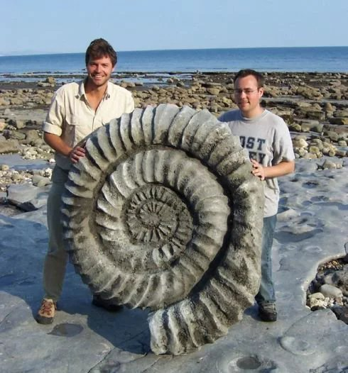 The-size-that-ammonites-could-assume-400-million-years-ago