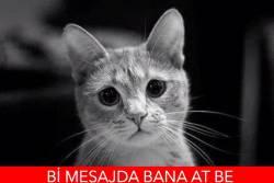 cat2 (3)